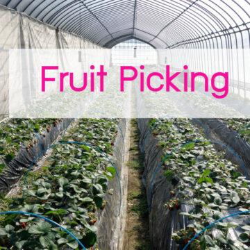 fruitpicking japan